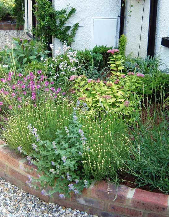 A gallery of structural plants by lovely lovely lovely for Structural plants for small gardens